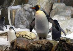penguinkeeper.jpeg