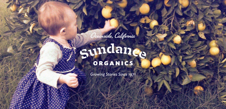 sundance_1.png