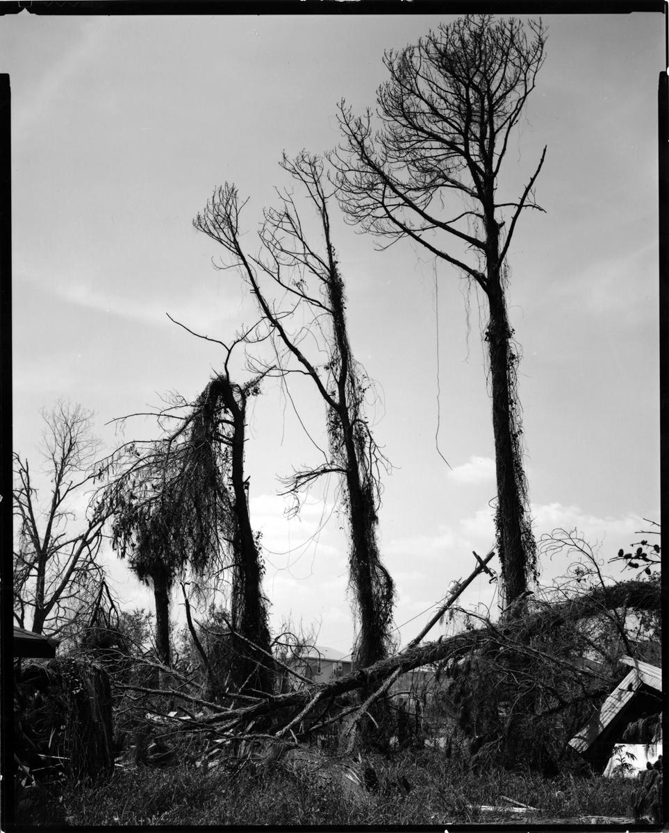 HessAdam_three trees.jpg