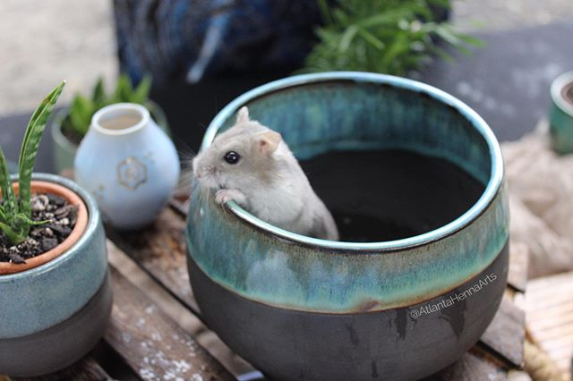 I'm happy to announce my pots have gotten the tiny hamster stamp of approval.