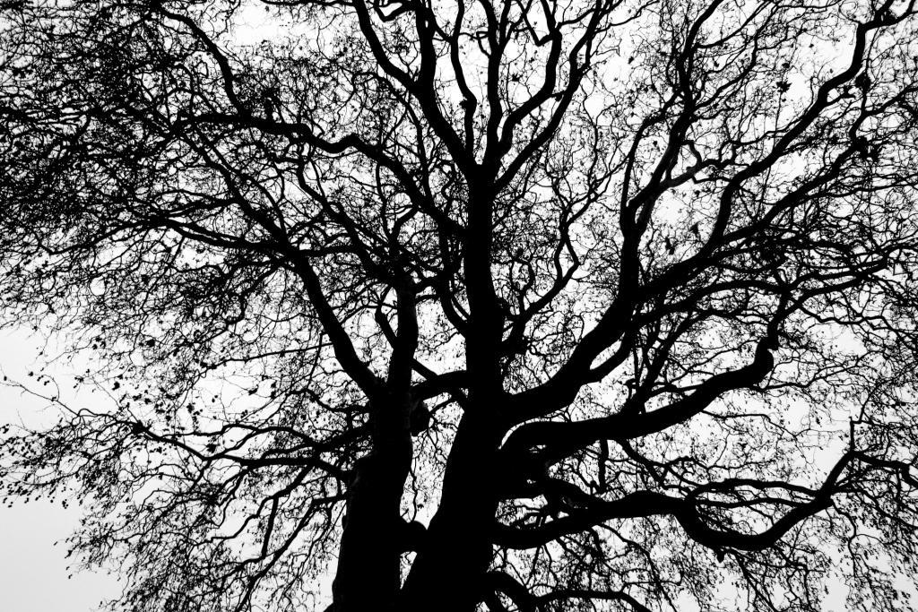 Utrecht tree