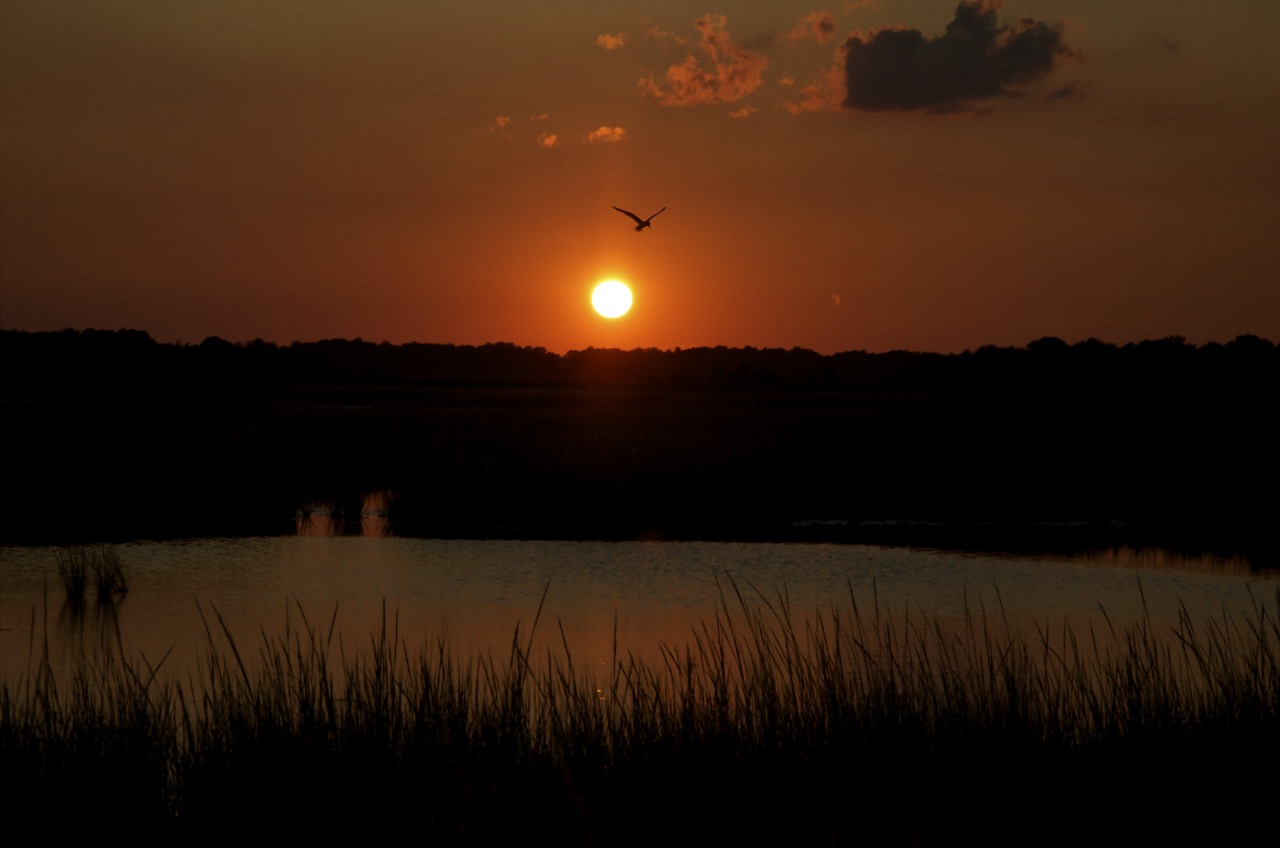 Sunset and the Tern
