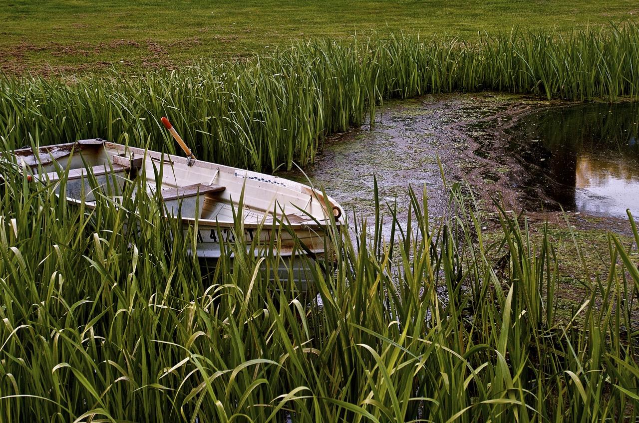 The Farm Pond