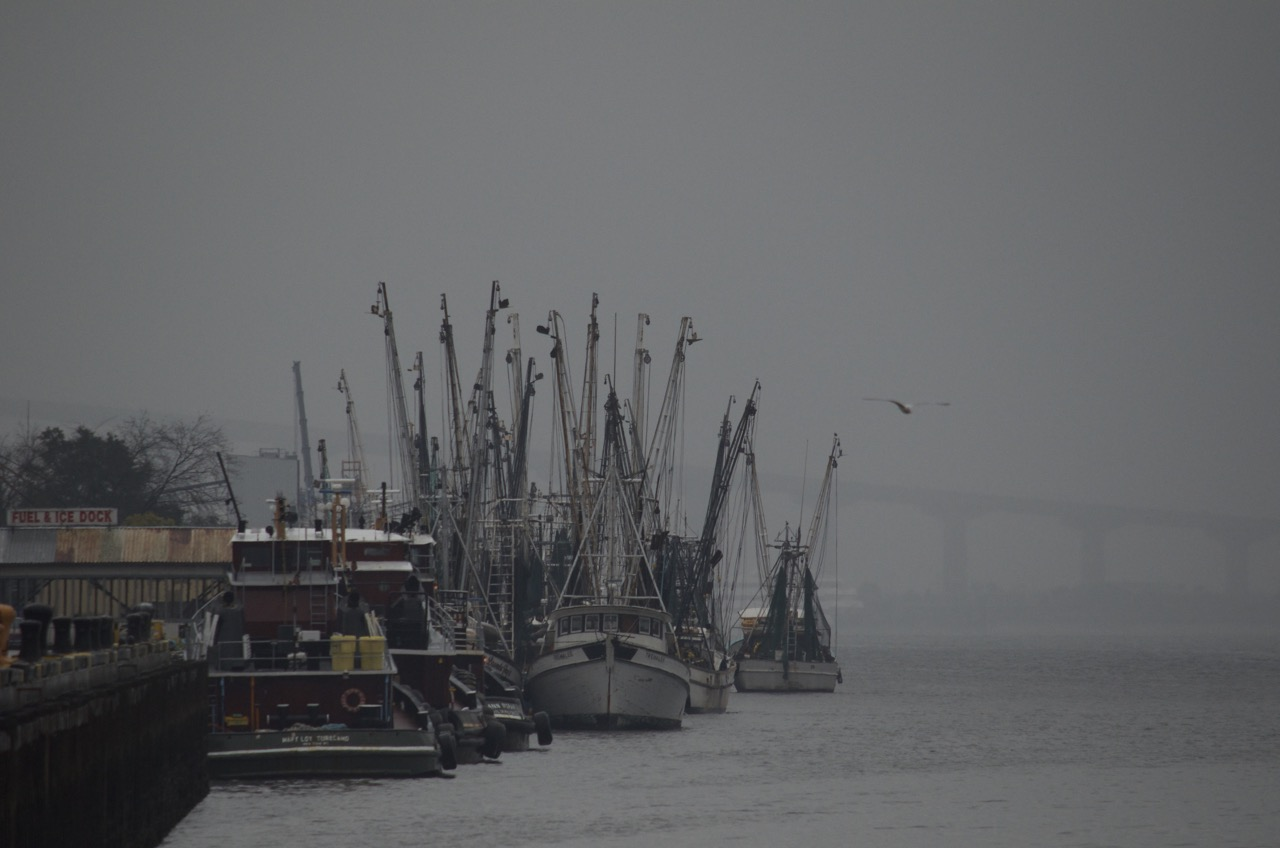 Shrimp Boats of Brunswick