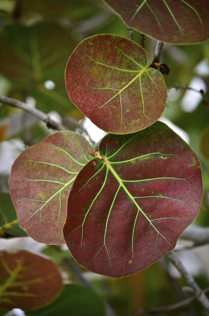 Leaves of Bahia Honda