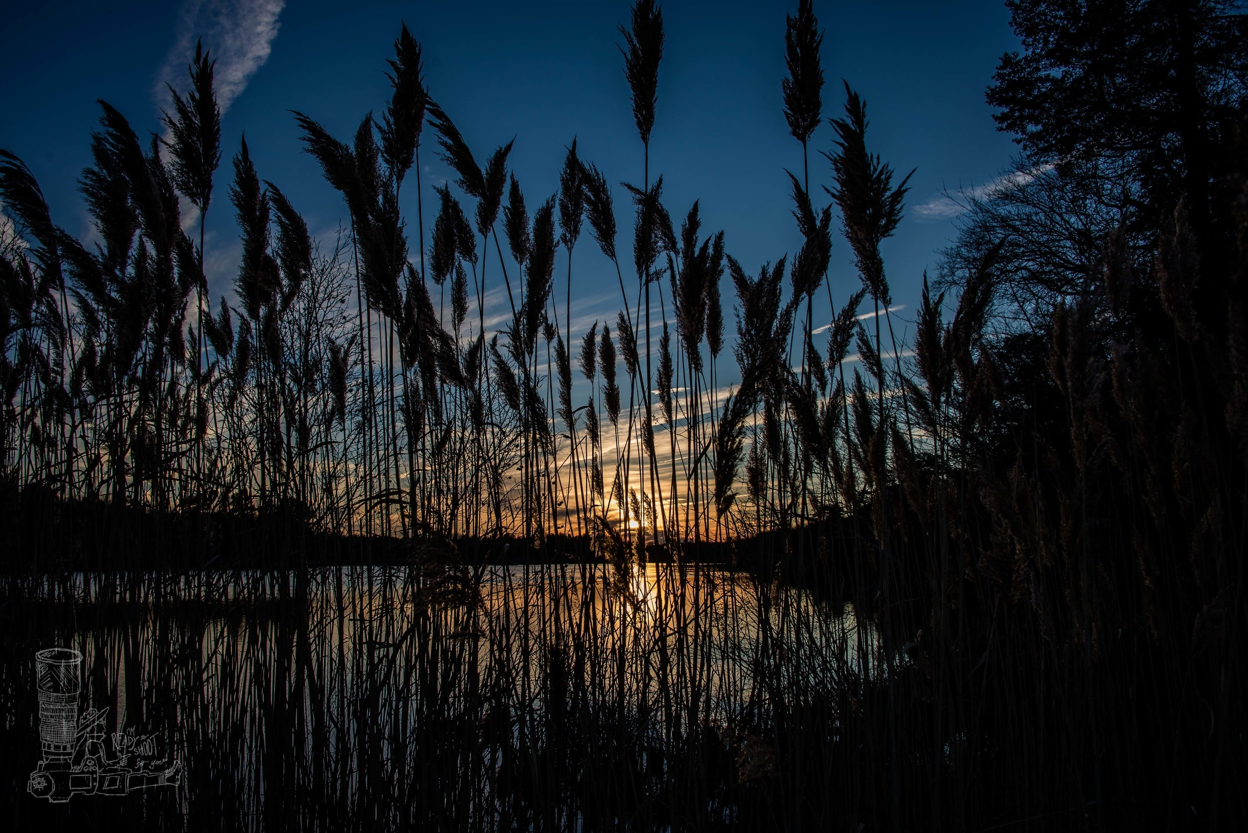 Setting Through the Reeds