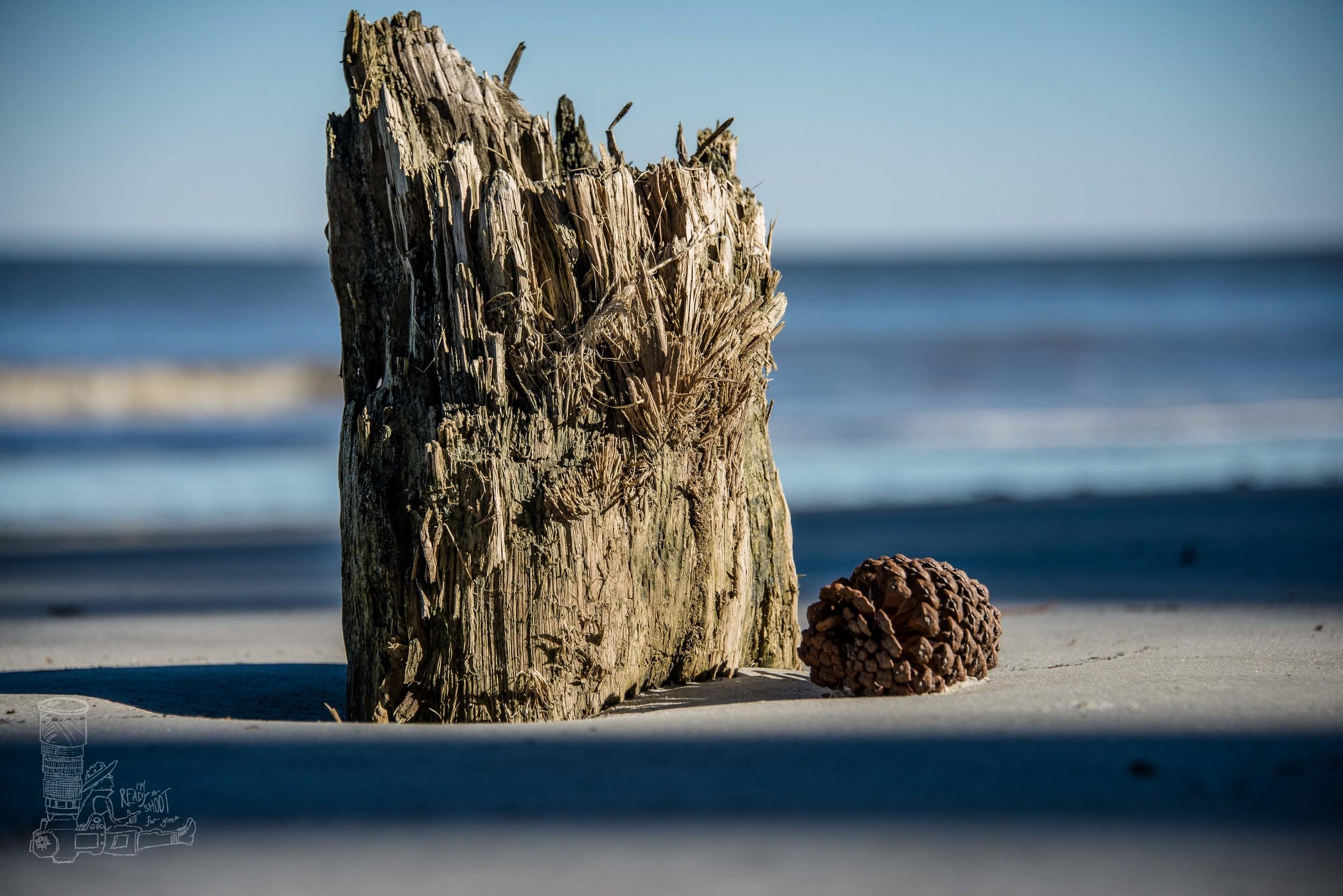 Still Life on Driftwood Beach