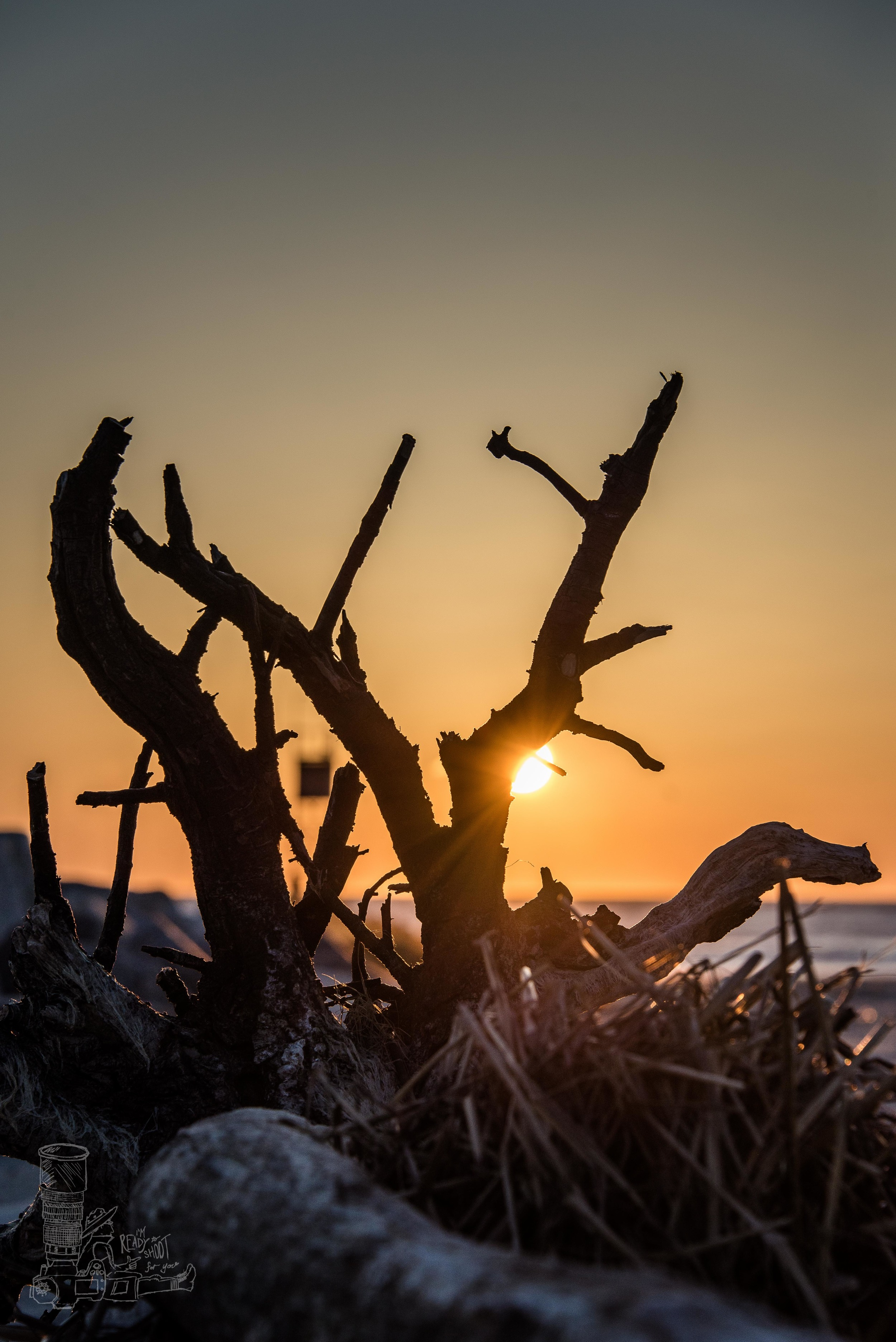 The Roots of Sunrise