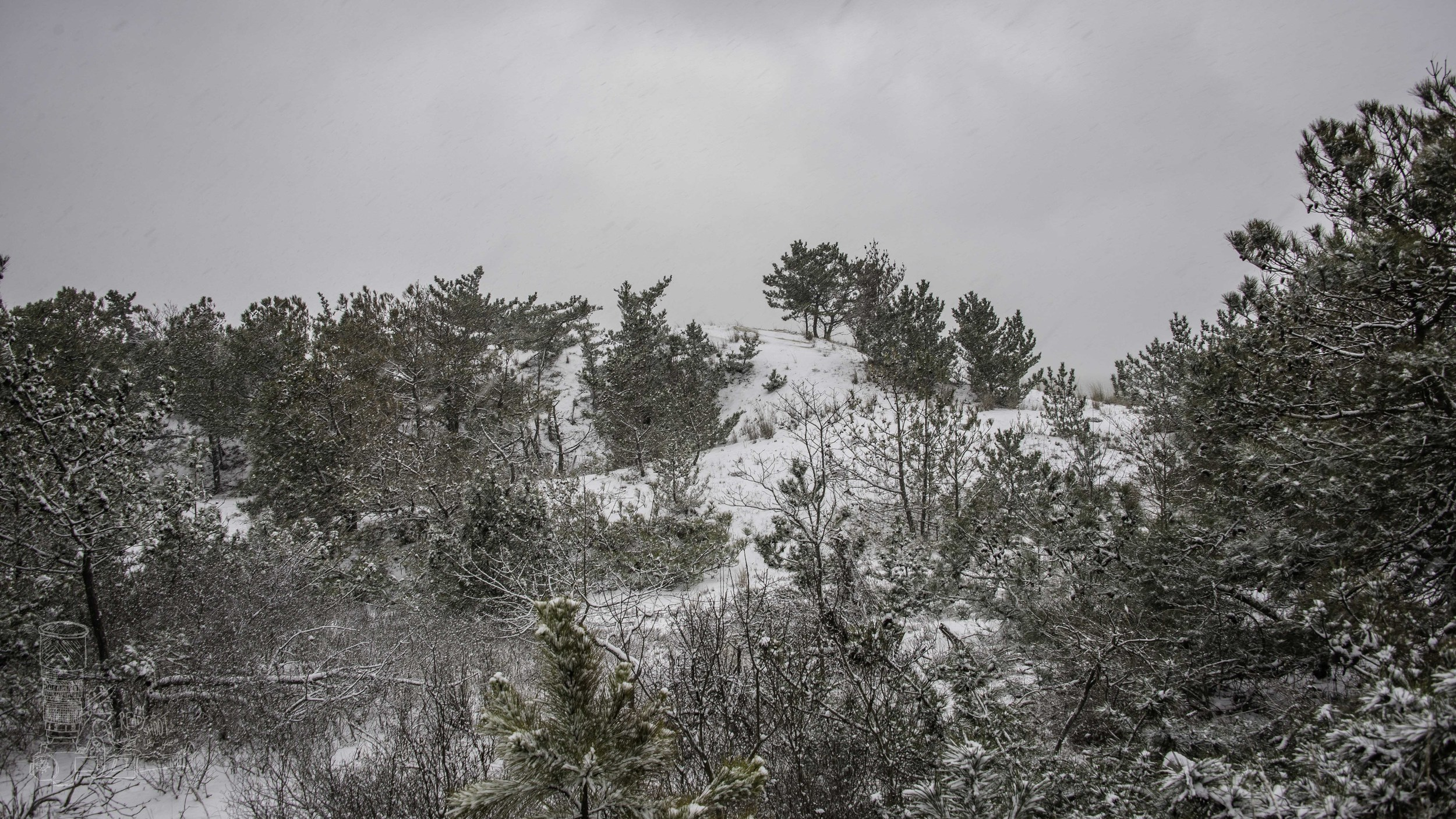 Snowing on the Pines