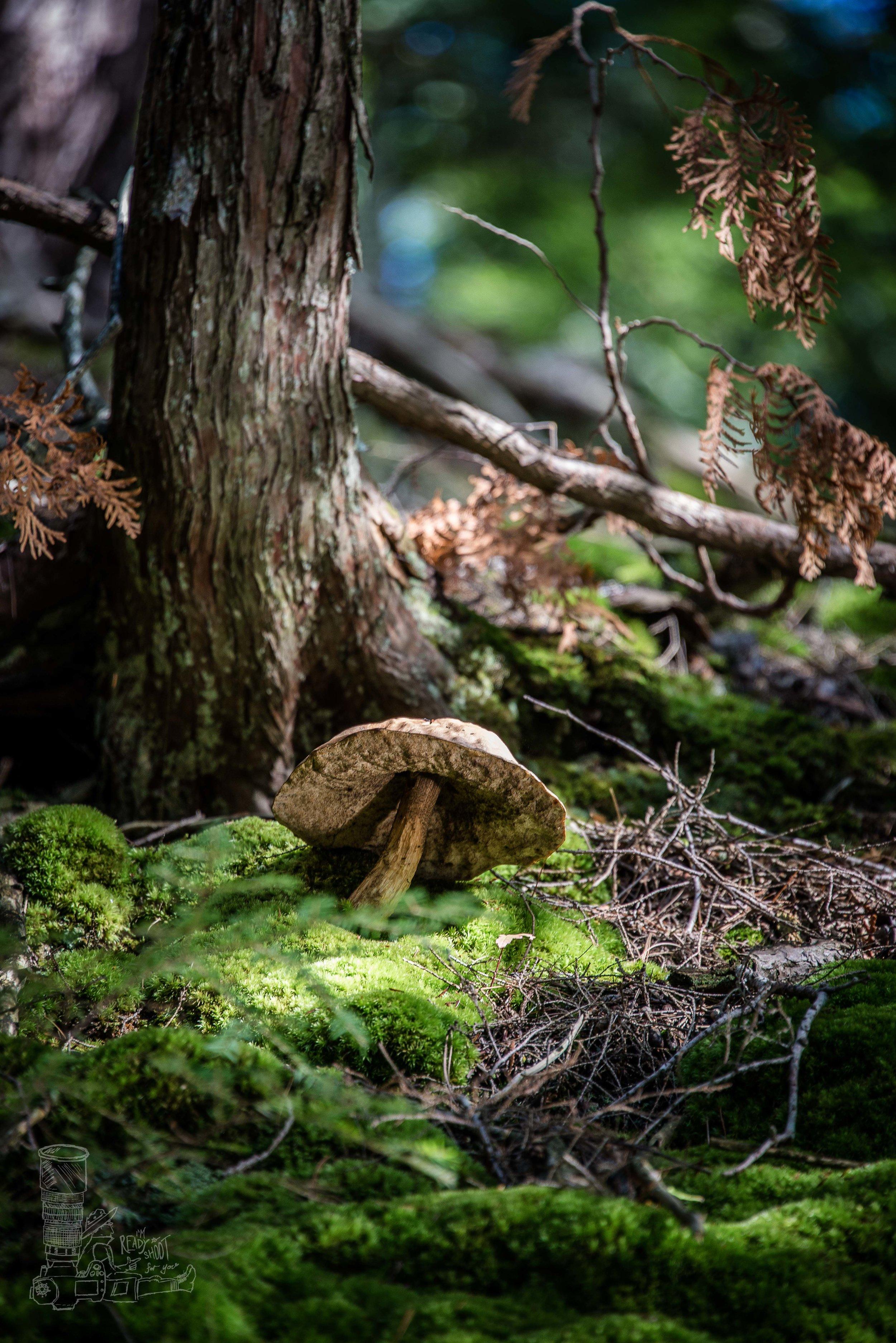 Tahquamenon Toadstool