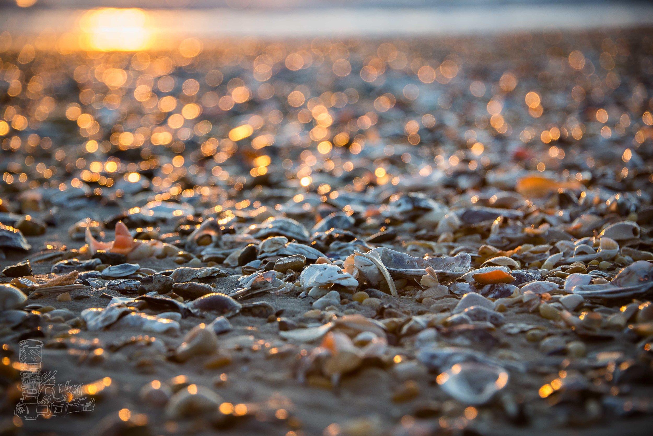 Cape Shells