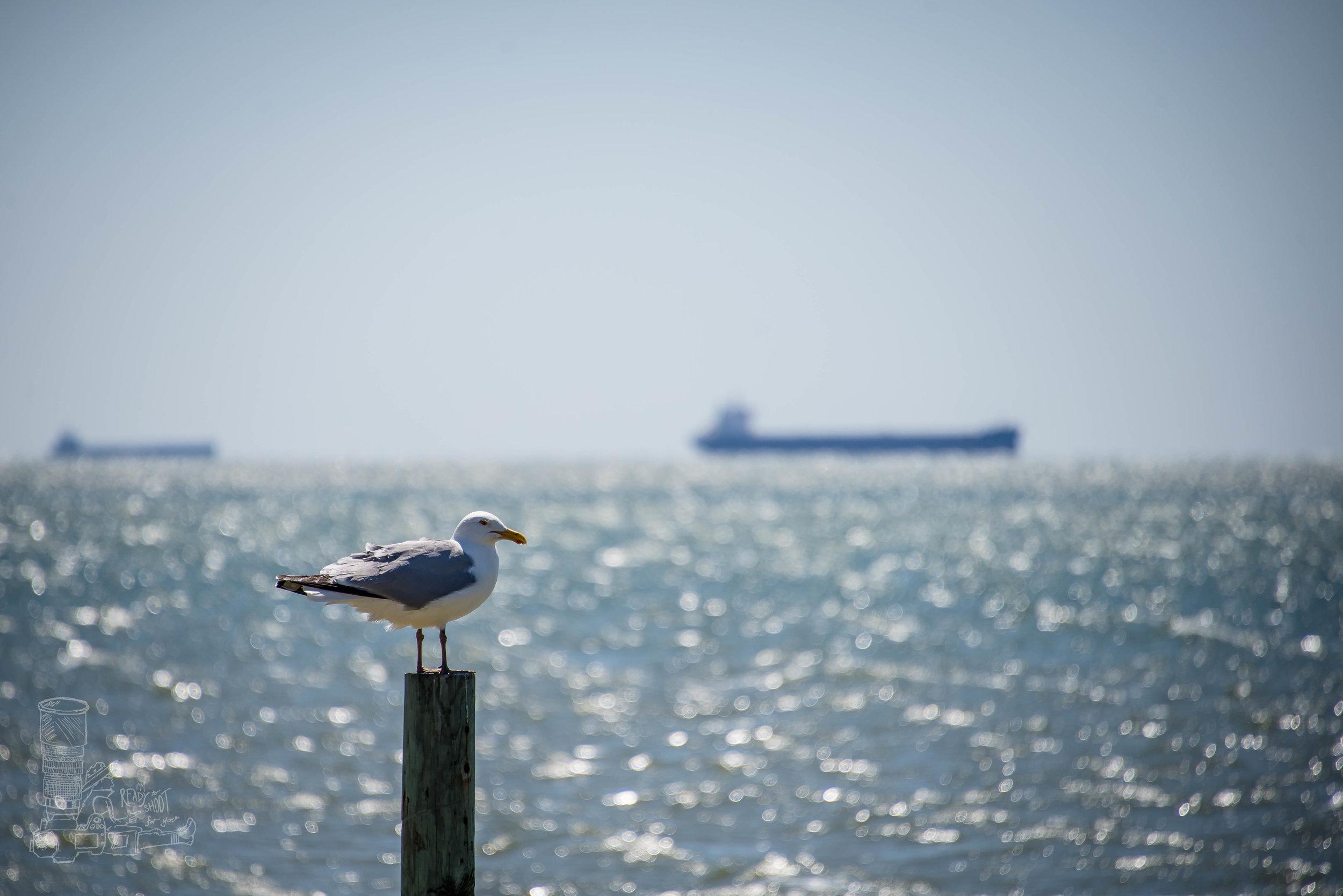 A Gull Moment