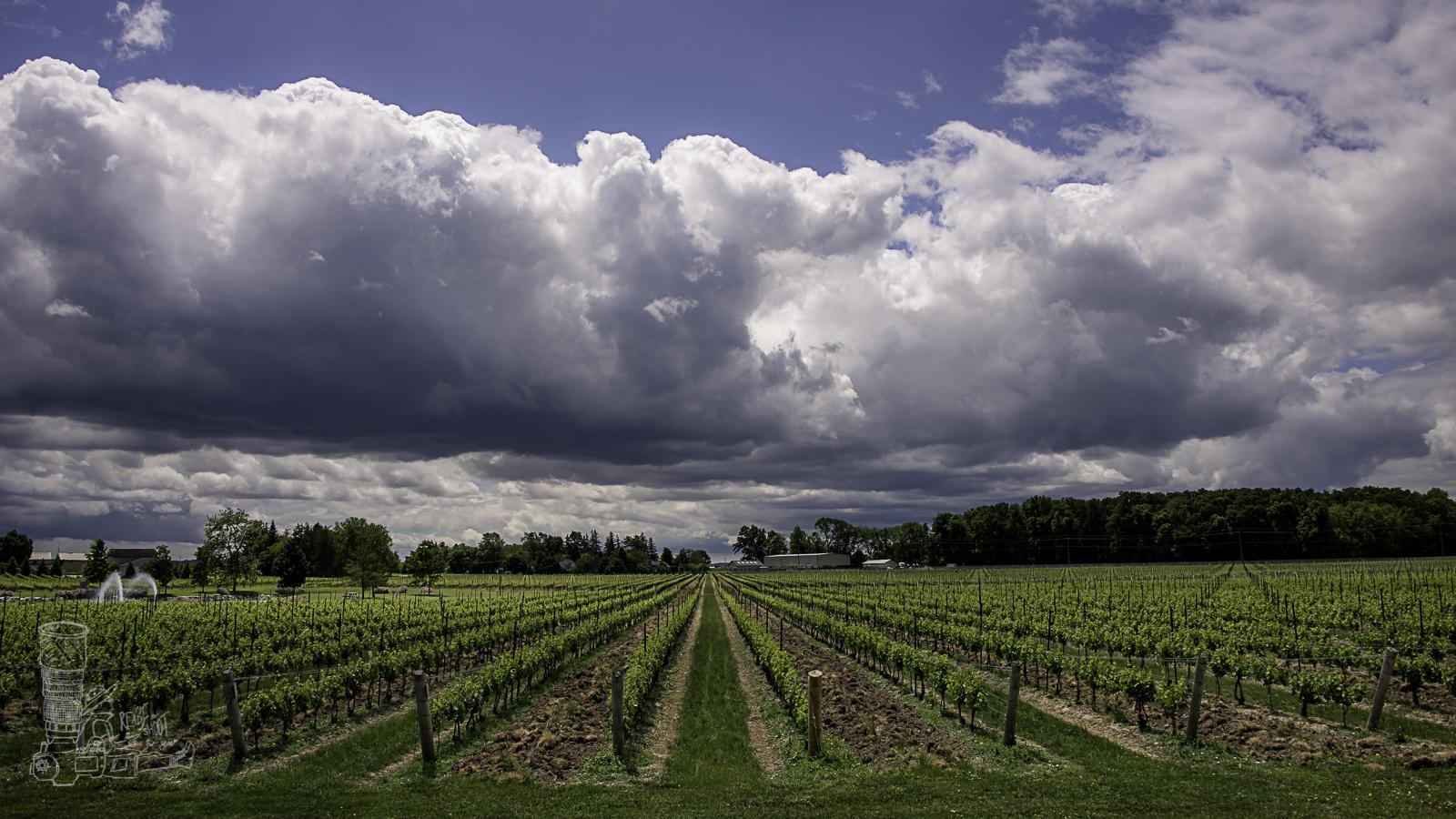 Vineyards Aplenty