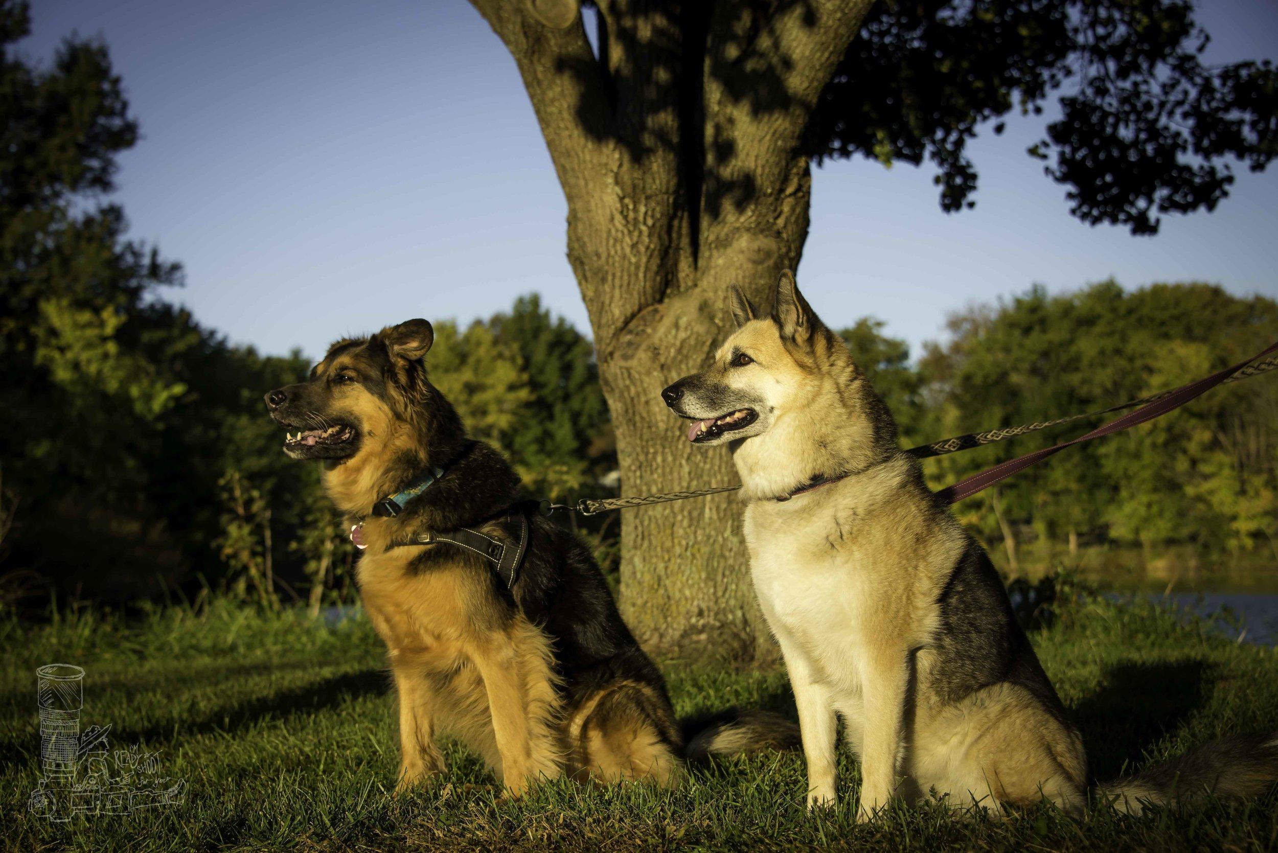 Two Beautiful Shepherds