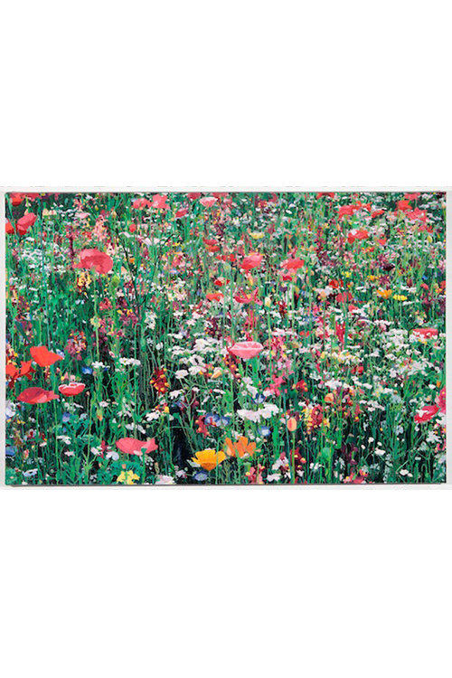 Pjätteryd Oil Painting: Flower Meadow