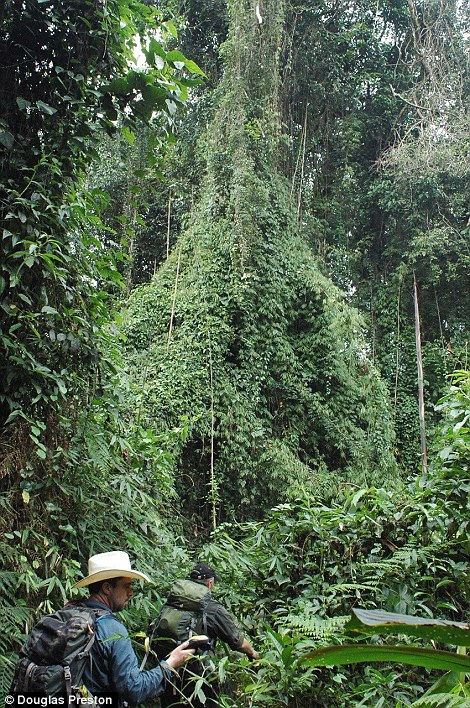 This photo, by Douglas Preston, gives an idea about how dense and intimidating this remote jungle was.