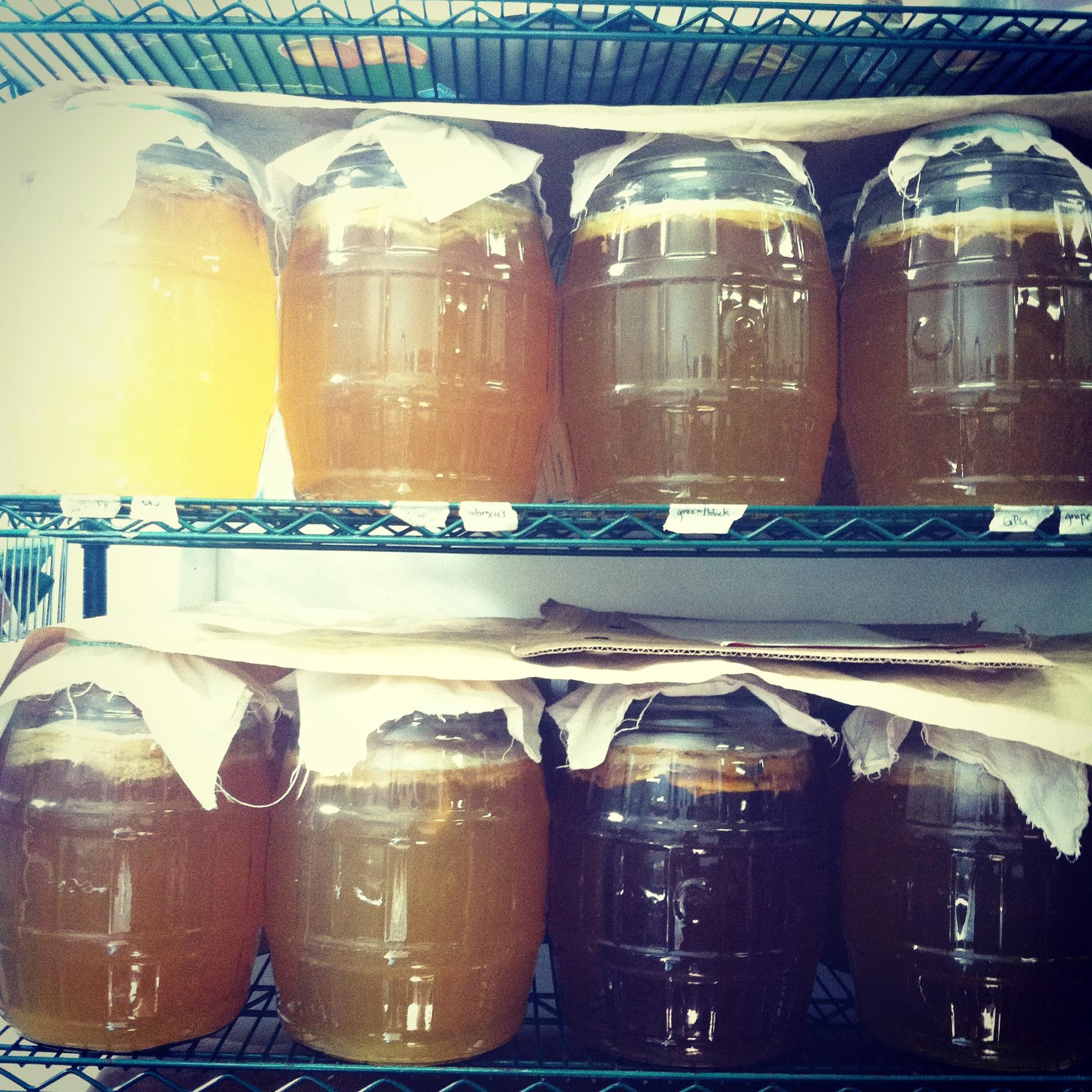 fermentingkambucha.JPG