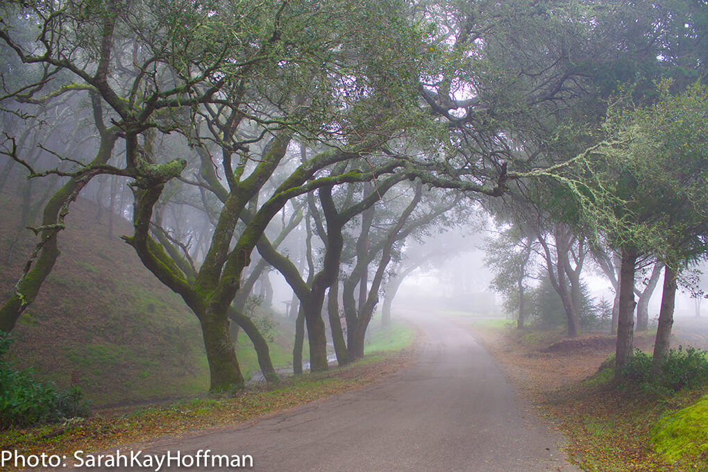 Retreats in Northern California