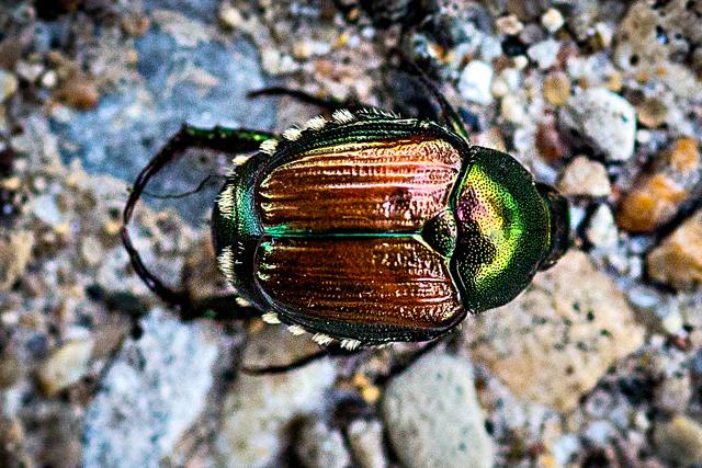bugs-2.jpg