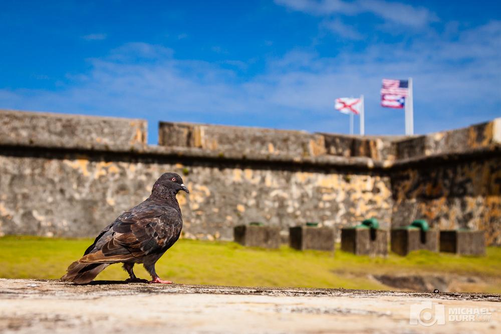 2015_PuertoRico_0137.jpg