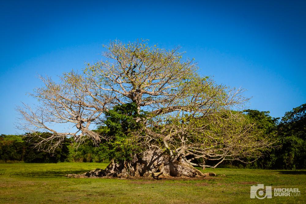 2015_PuertoRico_1189.jpg
