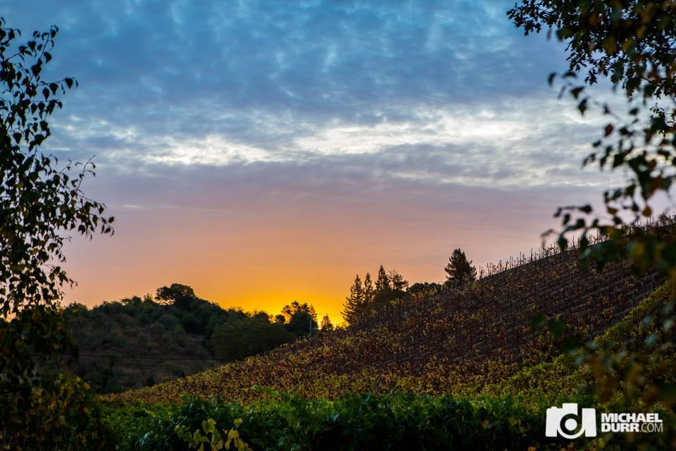 winecountry-126.jpg
