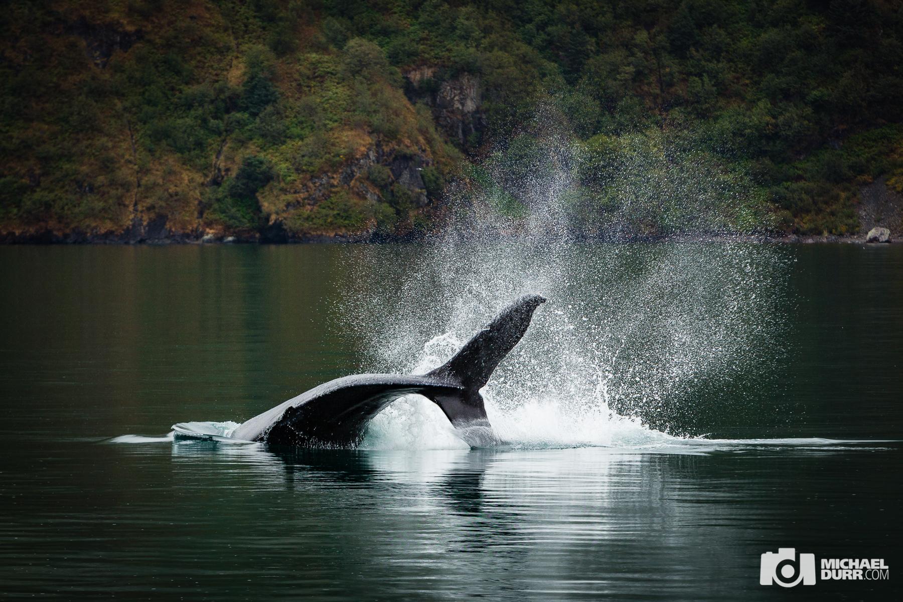 Alaska_MD_1588.jpg