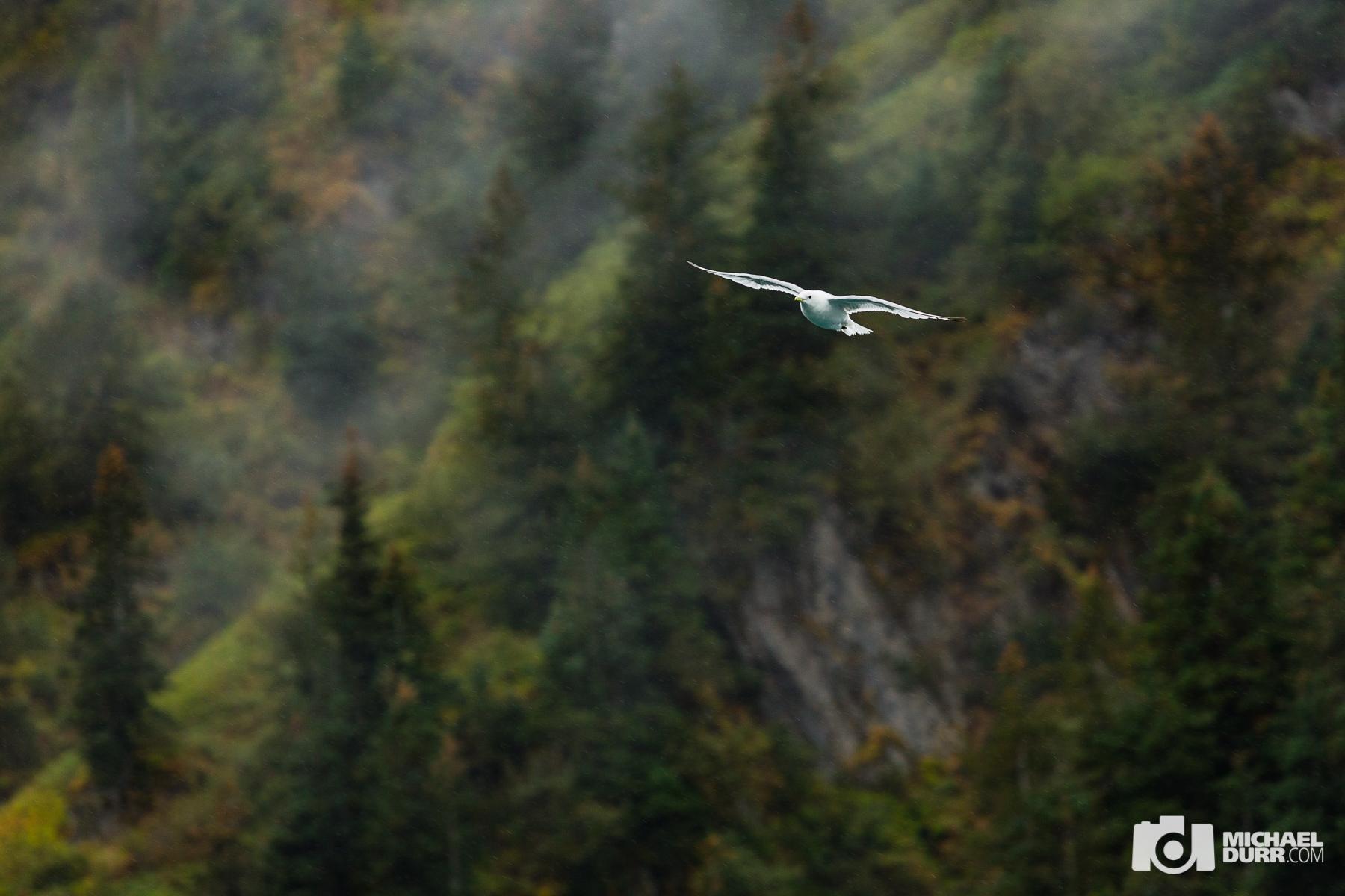 Alaska_MD_1606.jpg