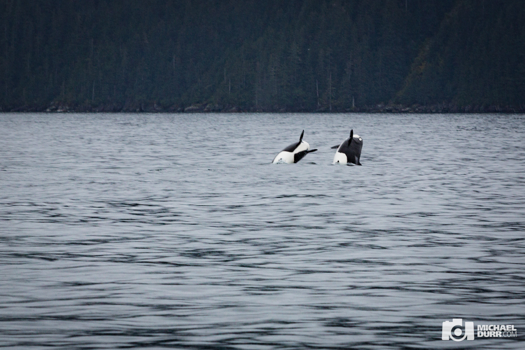 Alaska_MD_1760.jpg