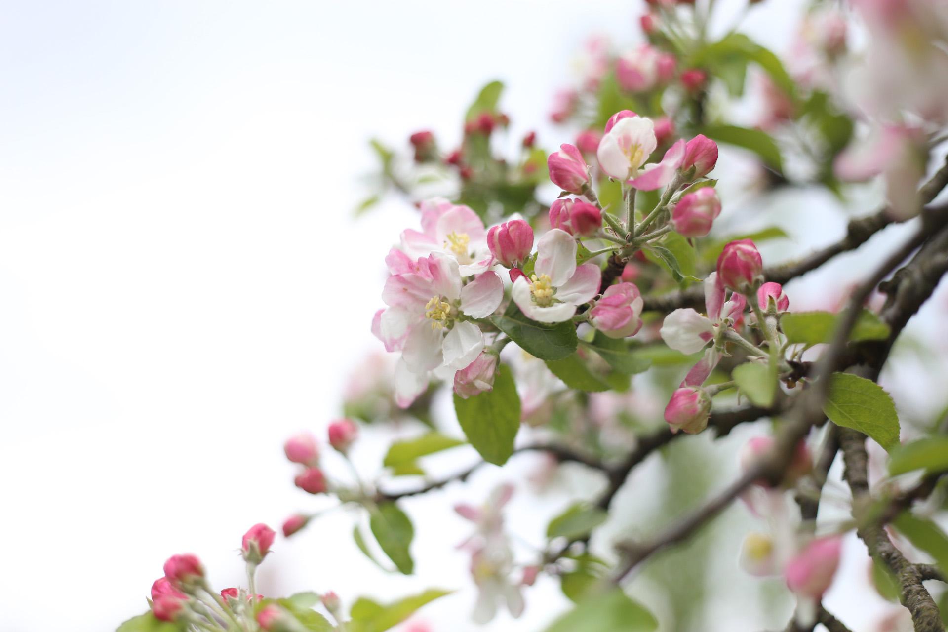 04Mar_Blossom.jpg