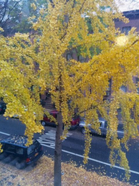 on tree.jpg