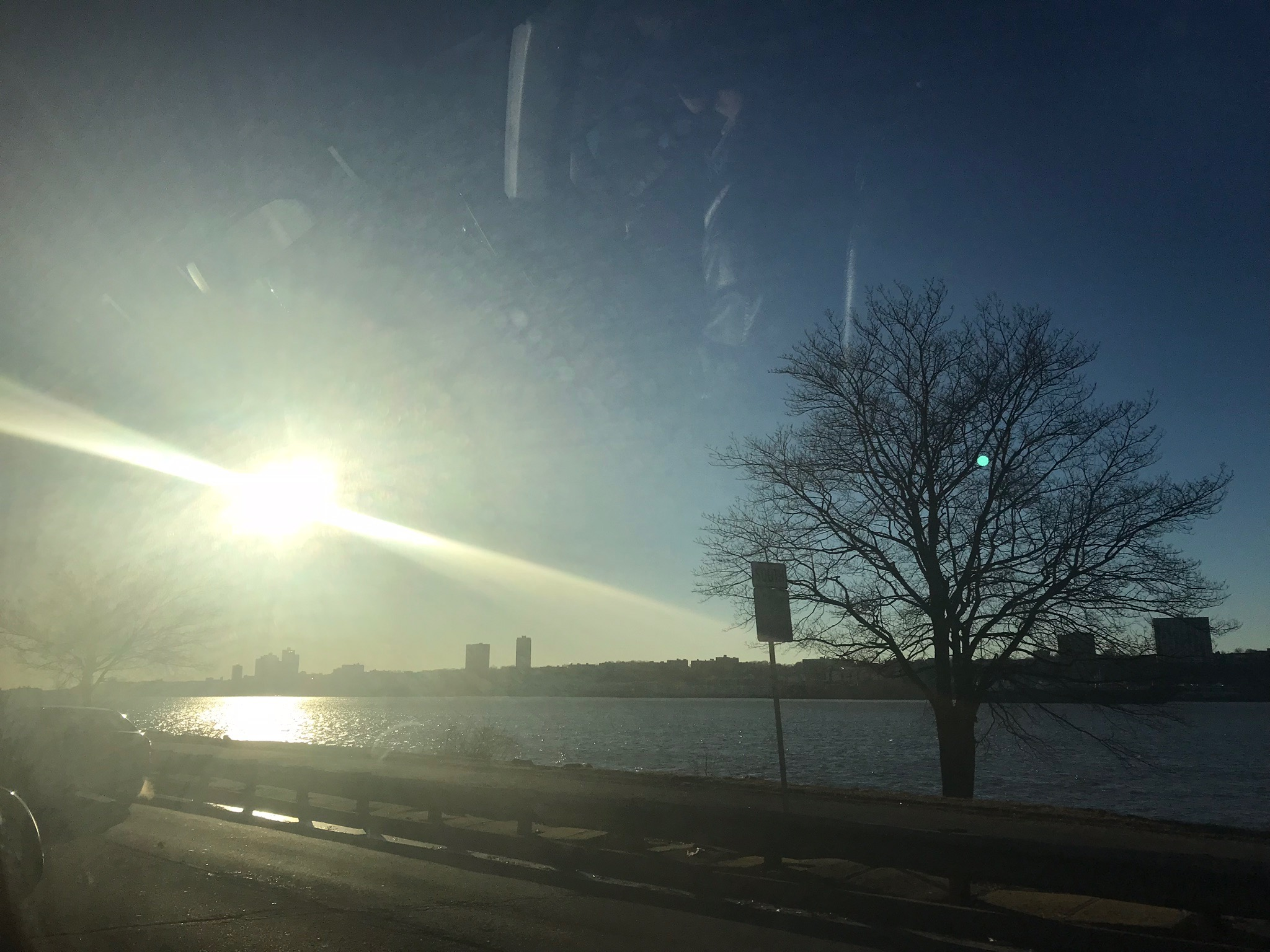 The sun came out! It melted the ice and burned off the fog! It's a new day!
