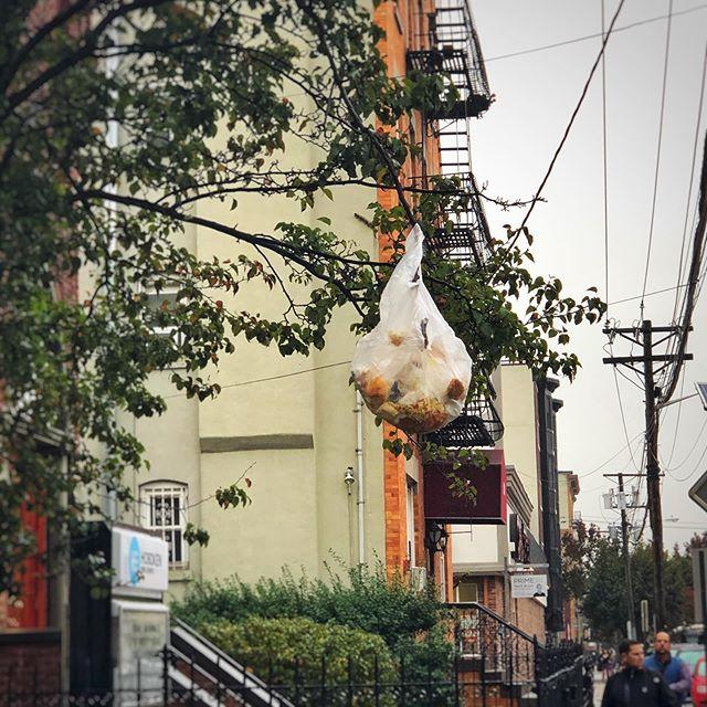 Trashfruit tree in bloom. #hoboken #natureinthecity