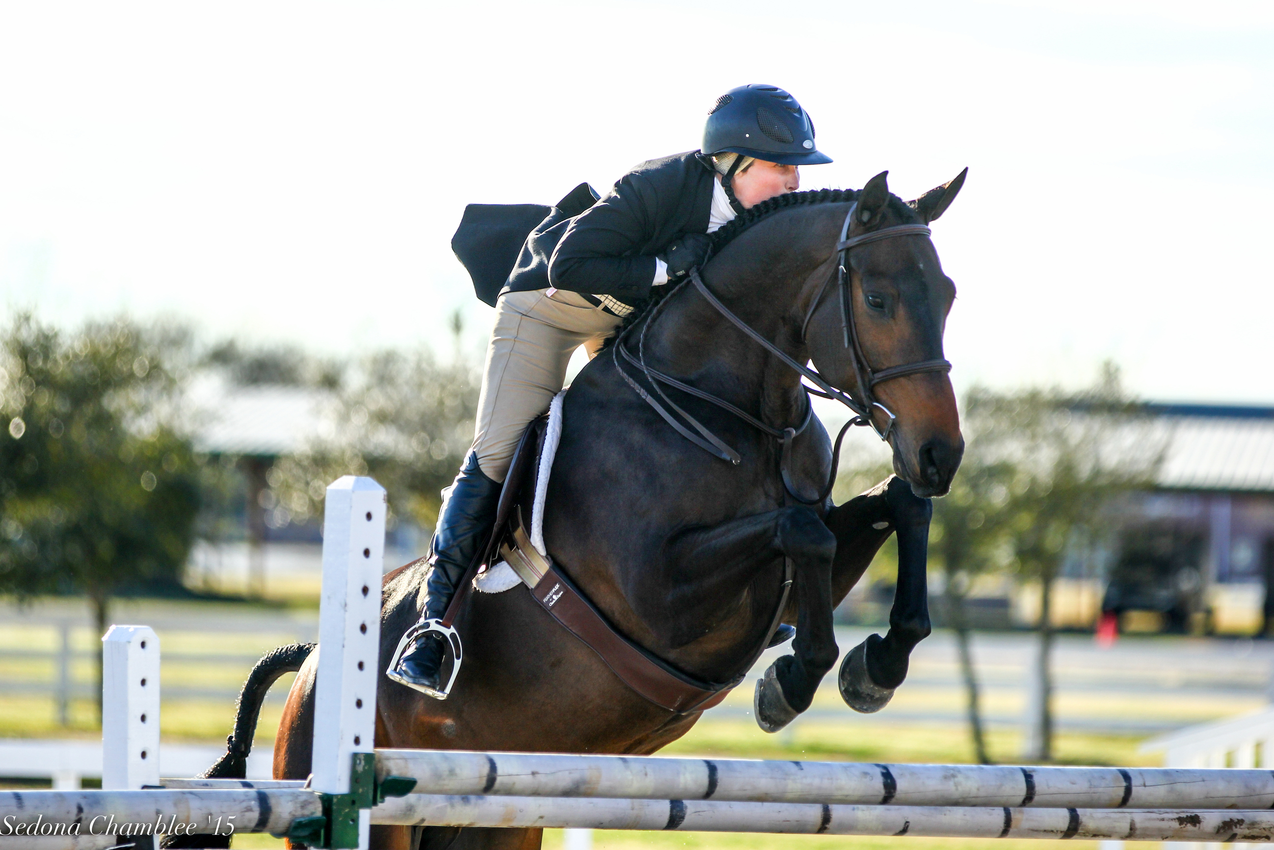 Linus , 16.1 h six year-old gelding, full brother to Harley. Owned by Haley Redifer, Champion at many shows in the First Year and Junior Hunters.