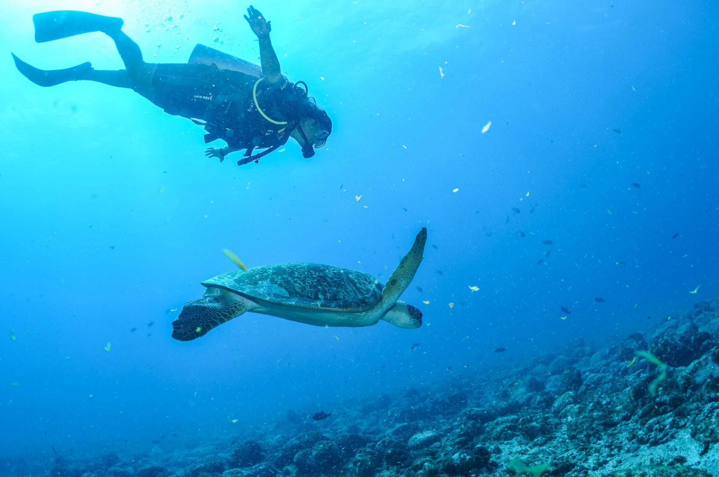 """Momento mágico durante o mergulho feito pela Noronha Divers, num ponto chamado """"Cordilheira""""."""