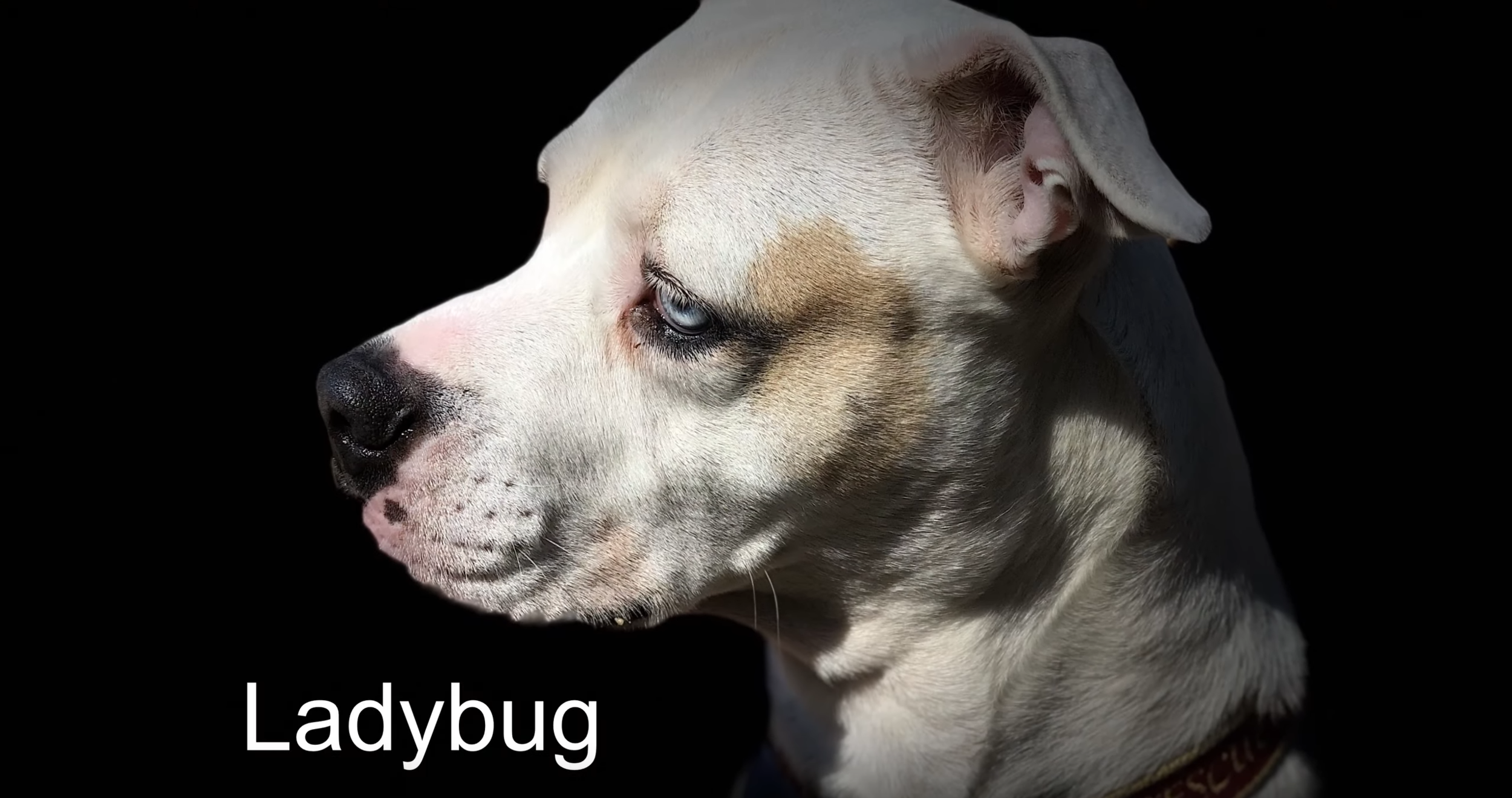 Ladybug-03.png