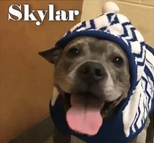 Skylar4.jpg
