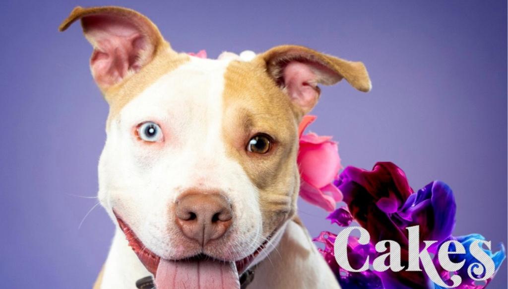 Cakes – Adopt a Homeless Animal Rescue