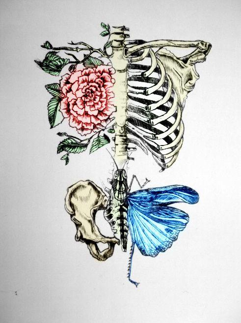 beautiful skeleton