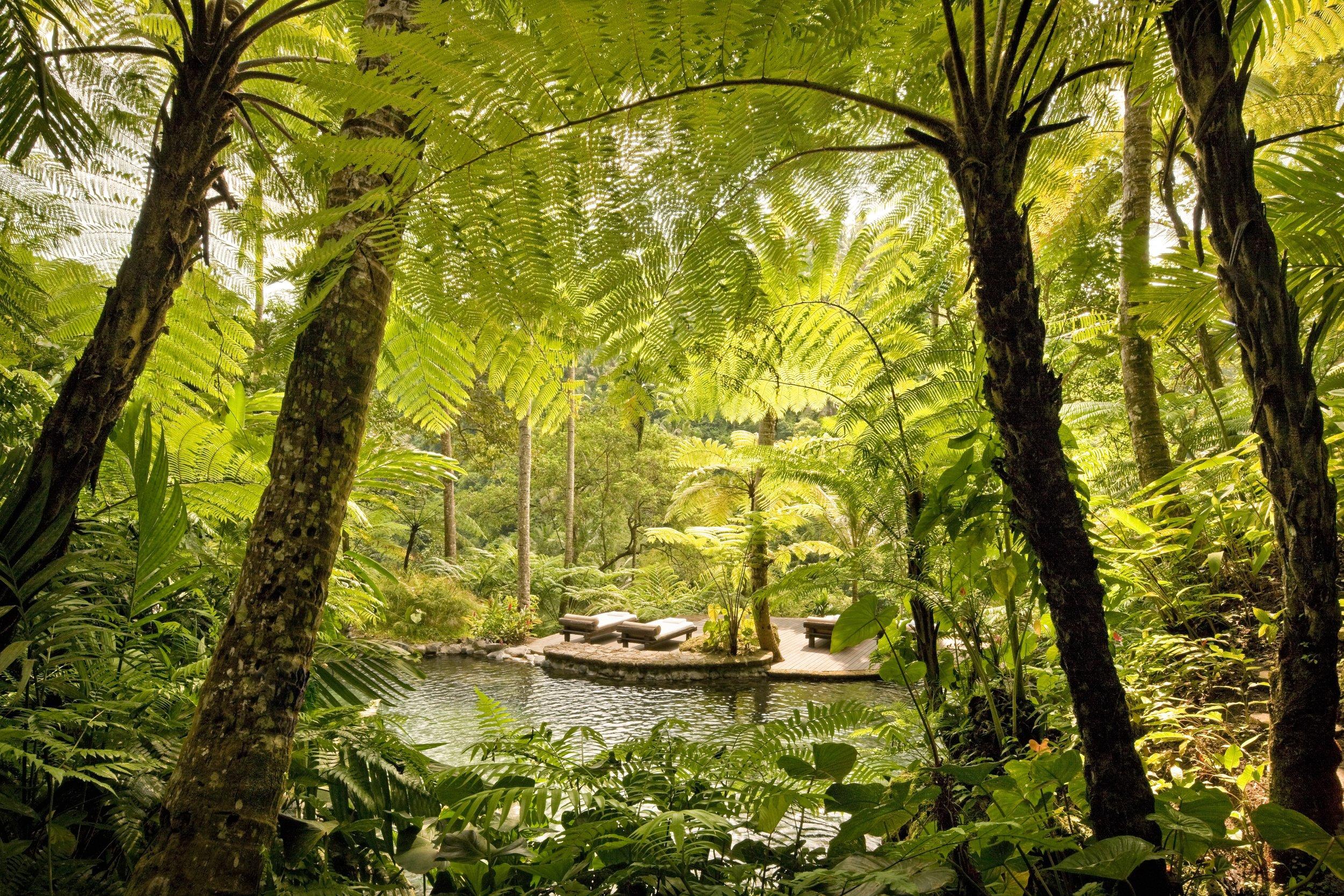 44164764-H1-Kedara_(Water_Garden)_2.jpg