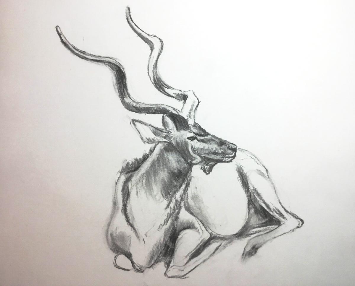 4-Greater Kudu .jpg