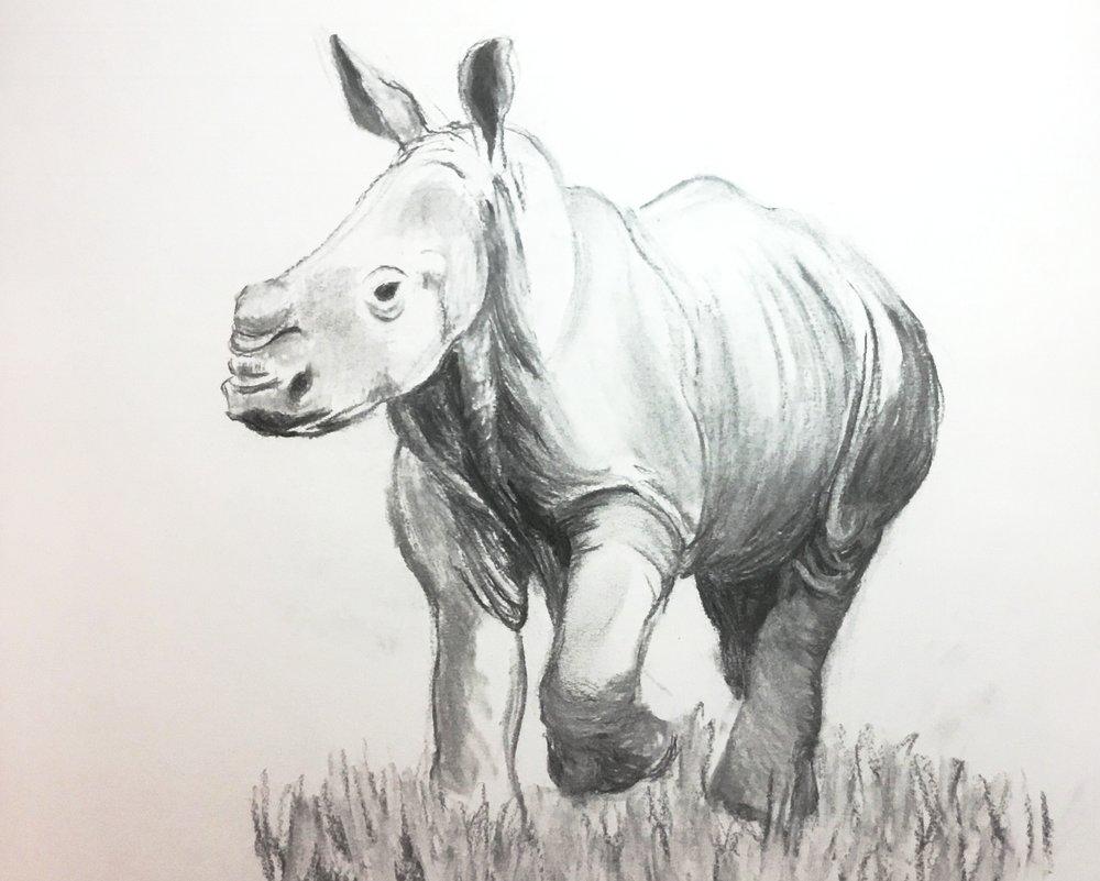 Baby+Rhino+horz.jpg