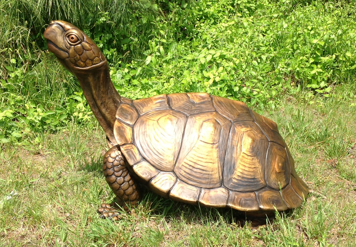 box turtle horz.png