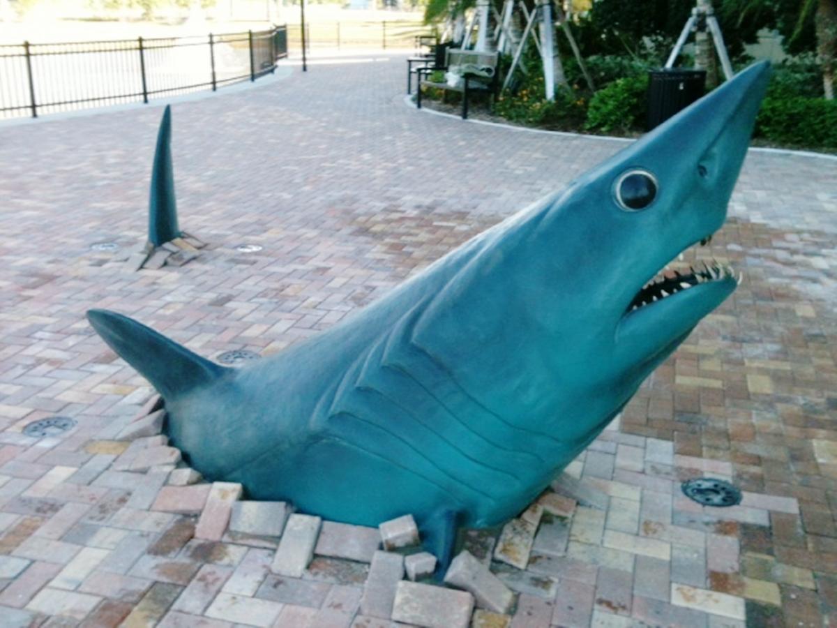 Past work #18 Nova Underground Shark (1).JPG