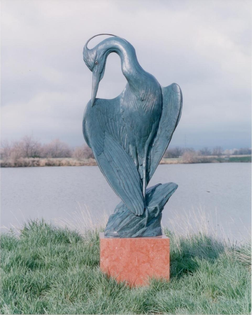 Image # 6 Spring Plumage  (Great Blue Heron) (1).jpg