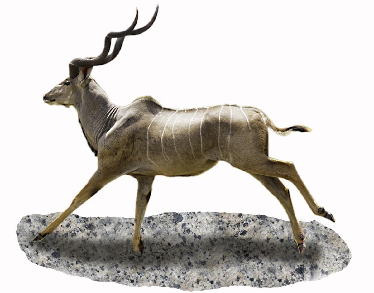 20. Kudu.jpg