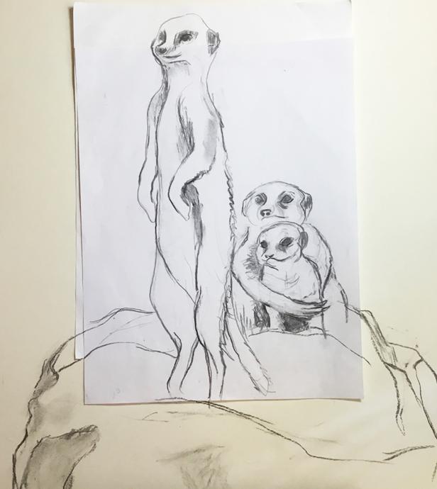 meerkats+horz.png