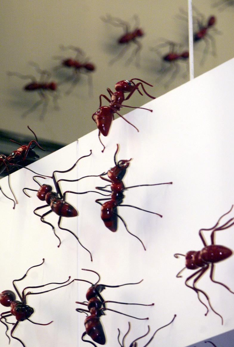 ants_marching.jpg