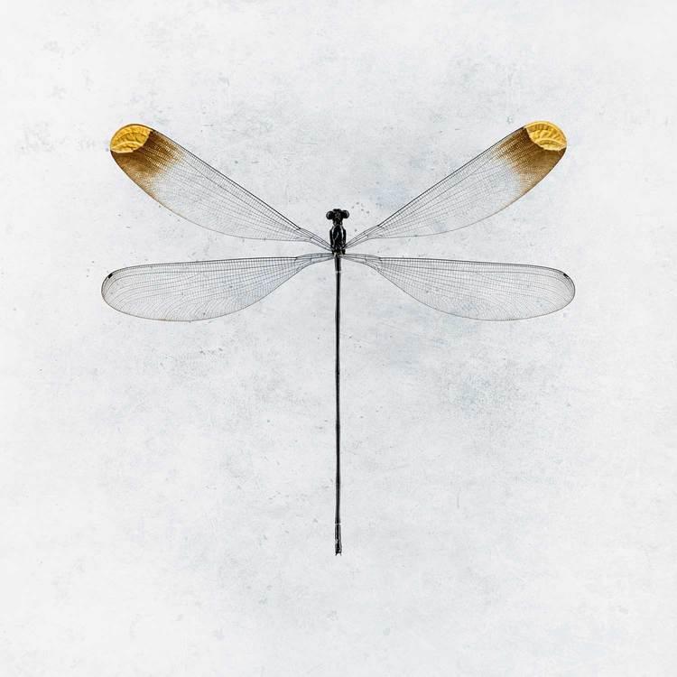 Mega-Fly-Bkgrd_1500.jpg