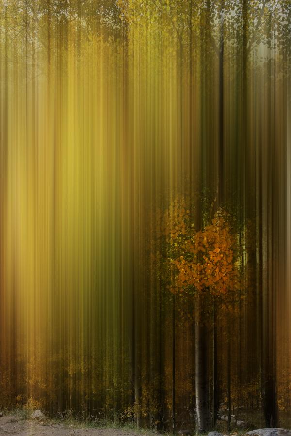 Autumn Dreaming.jpg
